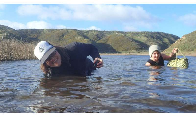 Turning the tide on mussel conservation