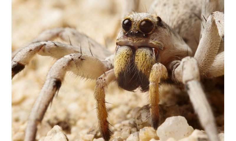 UC biologists peek into the past to see the future through tiny spider eyes