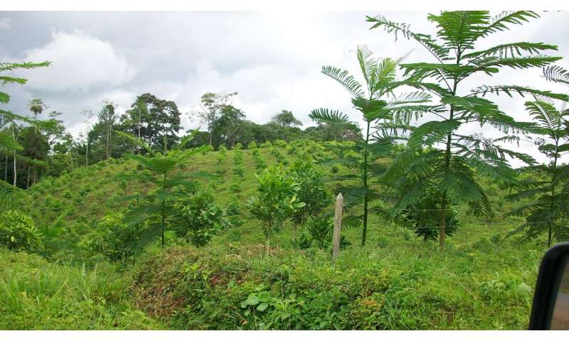 UMBC ecologist and colleagues expose bias in forest restoration studies