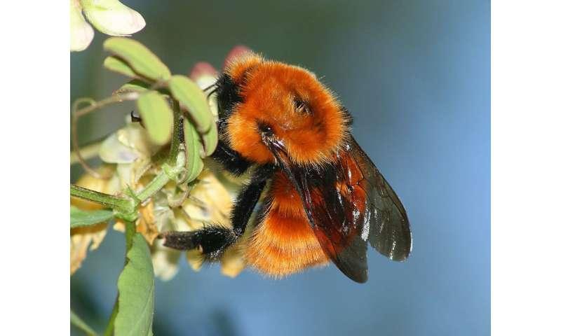 Uncoordinated trade policies aid alien bee invasions