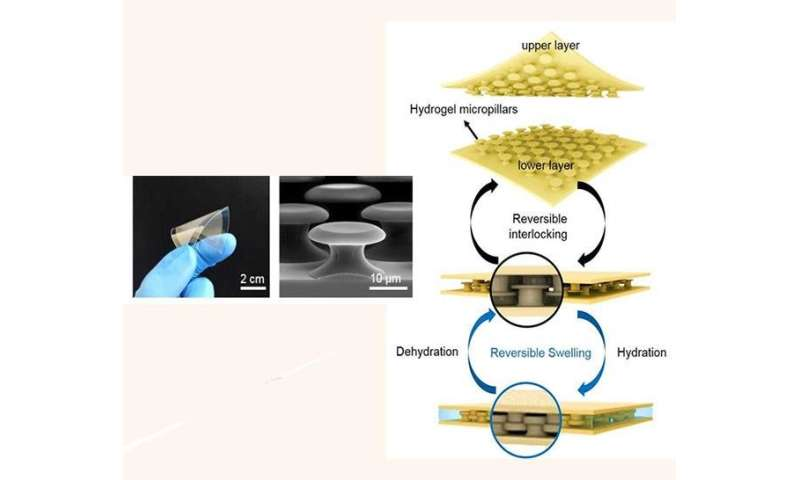 UNIST provides new insights into underwater adhesives