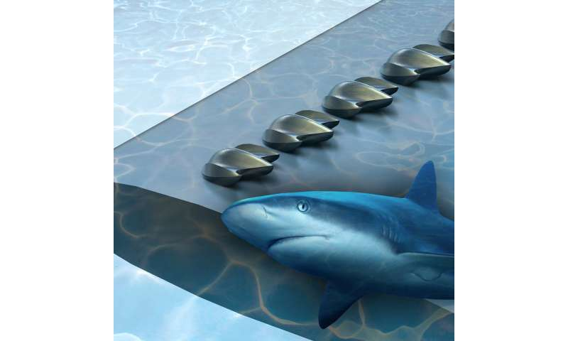 Using shark scales to design better drones, planes, and wind turbines