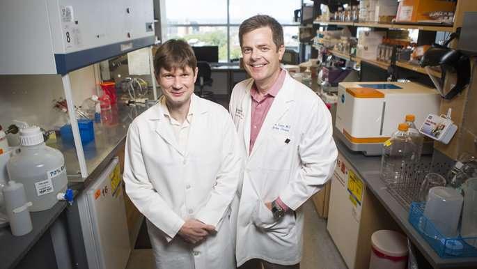 Vanderbilt team finds potent antibodies against three Ebola viruses