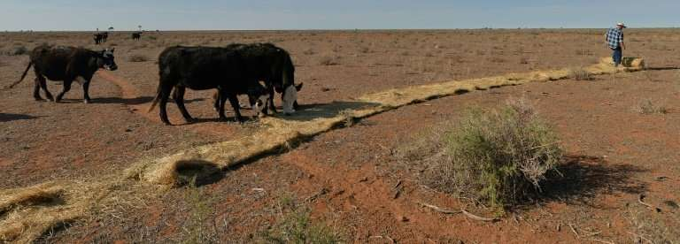 Vegetation for grazing has been scarce due to the severe and prolonged drought, forcing farmers such as Matt Ireson to provide s