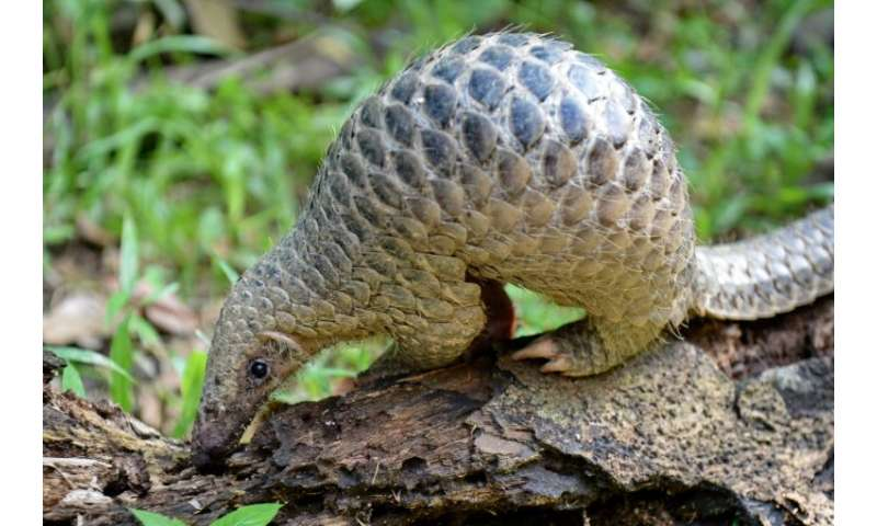 Vietnam is fighting an uphill battle against the lucrative ivory and pangolin trade