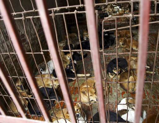 Vietnam's capital urges residents to stop eating dog meat