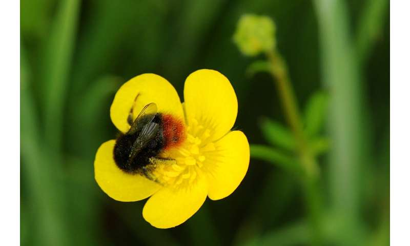 'Virtual safe space' to help bumblebees