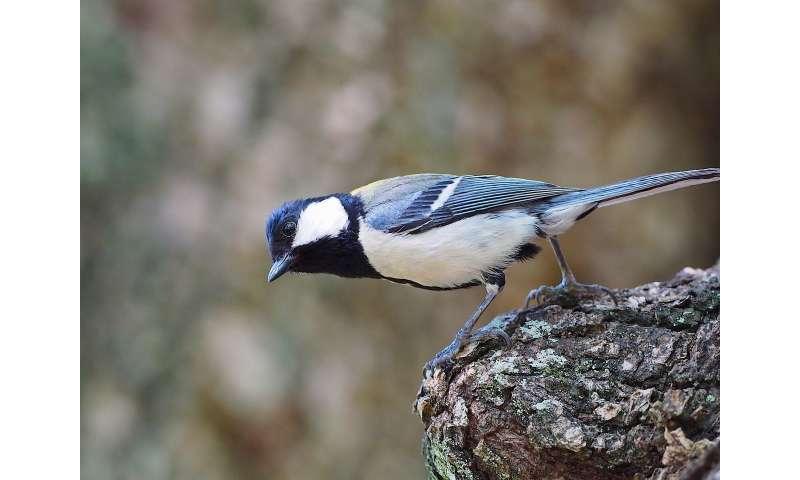 Visualizing danger from songbird warning calls
