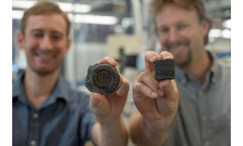 Volcanic activity, declining ocean oxygen triggered mass extinction of ancient organisms