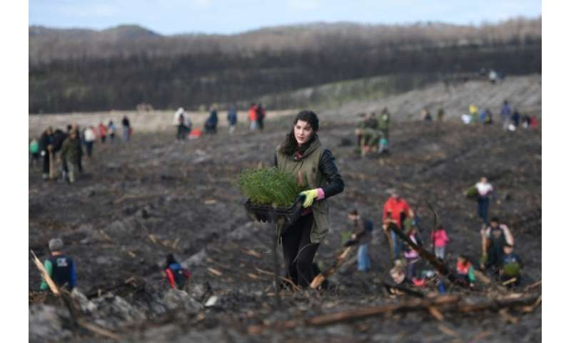 Volunteers have begun planting the first of 22 million trees needed to bring Portugal's oldest forest back to life