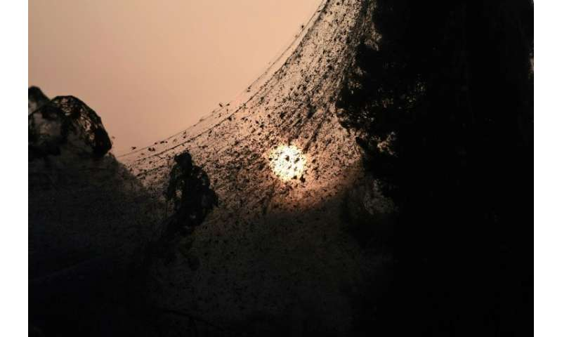 Warm weather has increased population of gnats and mosquitoes causing an overpopulation of spiders who feed off them