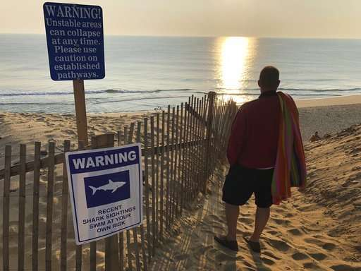 Was a great white shark to blame for Cape Cod attack?