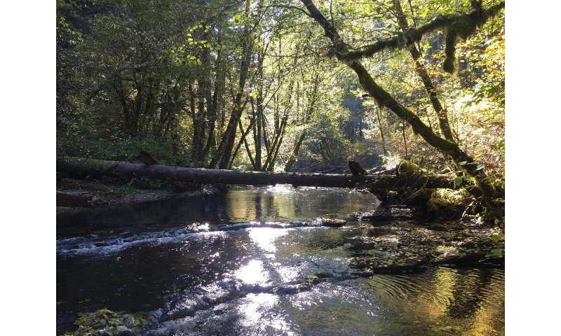 **Watershed groups have had a positive impact on their local water quality, study finds
