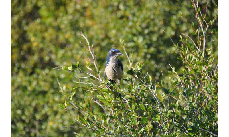 What homebody island birds could tell us about adaptation and evolution
