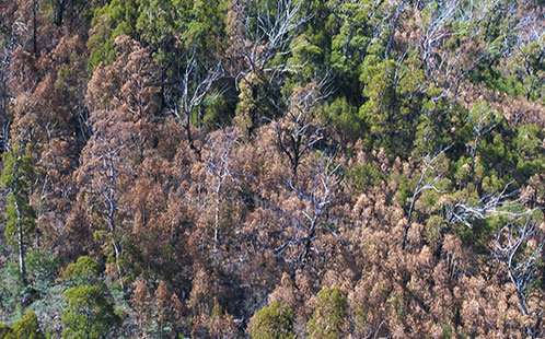 What killed the patient? Determining causes of tree death during droughts and heatwaves