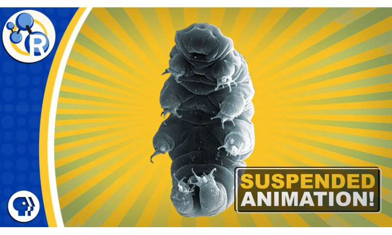 What makes tardigrades such great survivors (video)