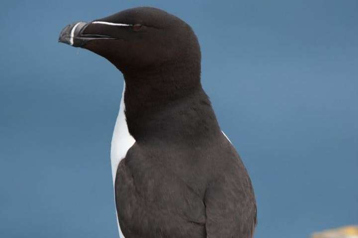 What seabirds can tell us about the tide