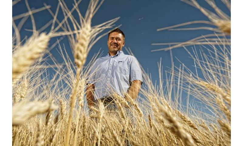 Wheat genome blueprint accelerates innovation