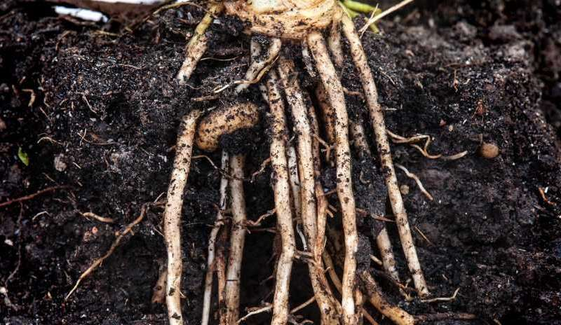 When roots crack and worms crunch