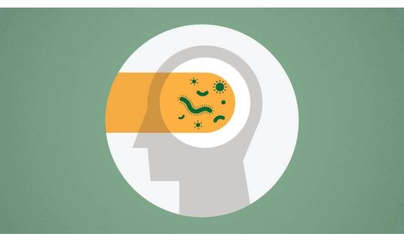 When sepsis patients face brain impairment, is gut bacteria to blame?
