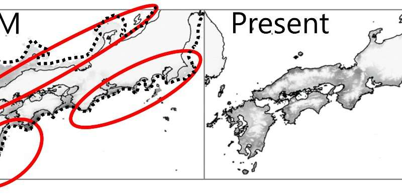 Where did broadleaved evergreen trees survive during the last glacial period in Japan?