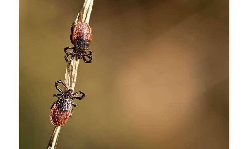 Who got bit? By mailing in 16,000 ticks, citizen scientists help track disease exposures