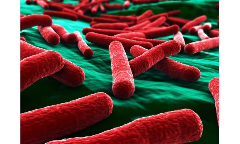 Why are some  E. coli deadly while others live peacefully within our bodies?