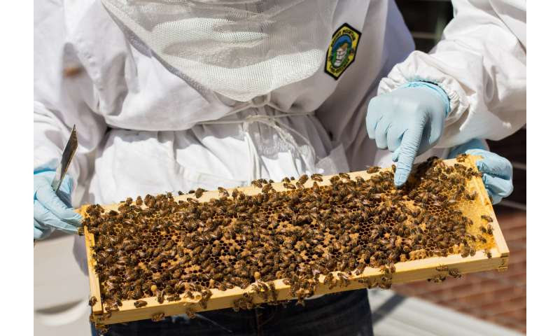 Why bees soared and slime flopped as inspirations for systems engineering