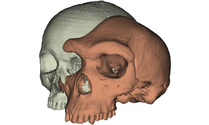 Why expressive brows might have mattered in human evolution