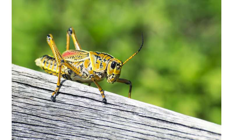 Why the summer sound of noisy crickets is growing fainter