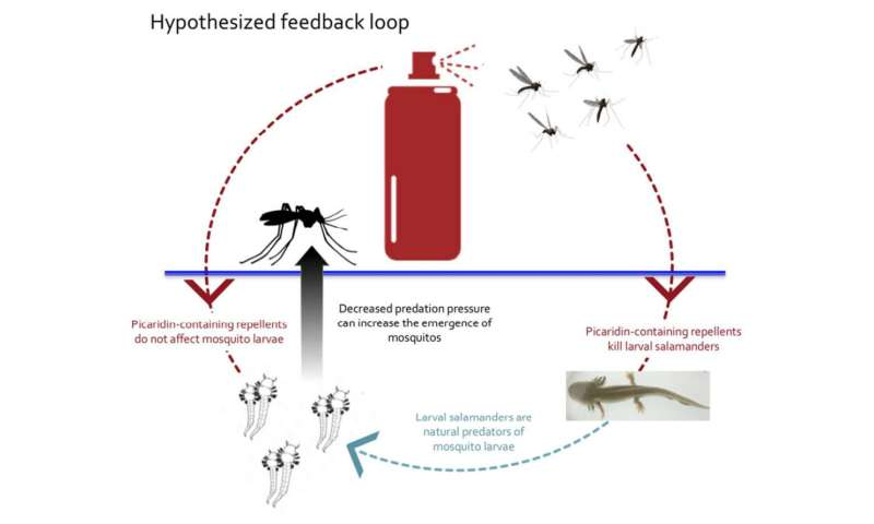 Widely used mosquito repellent proves lethal to larval salamanders