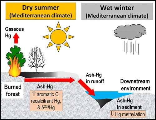 Wildfire ash could trap mercury