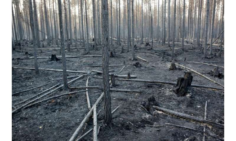 Wildfires in Sweden have laid waste to at least 25,000 hectares (62,000 acres) of mainly forested land