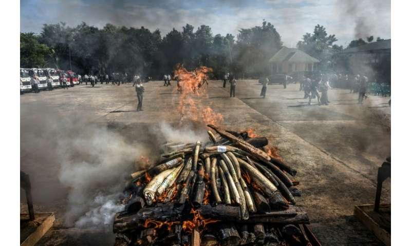Wildlife parts worth more than a million dollars were destroyed at the Myanmar ceremony