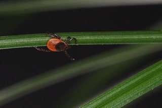 Will a cold winter kill off ticks?