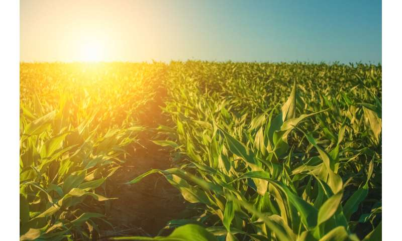 Will rising carbon dioxide levels really boost plantgrowth?