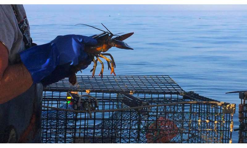 With fewer types of fish to catch, Maine fishermen may be losing their knowledge of the sea