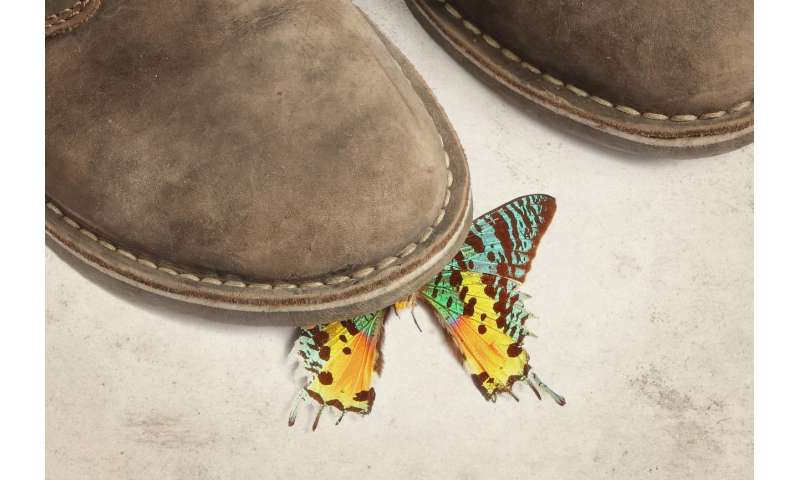 Would stepping on the first butterfly really change the history of evolution?
