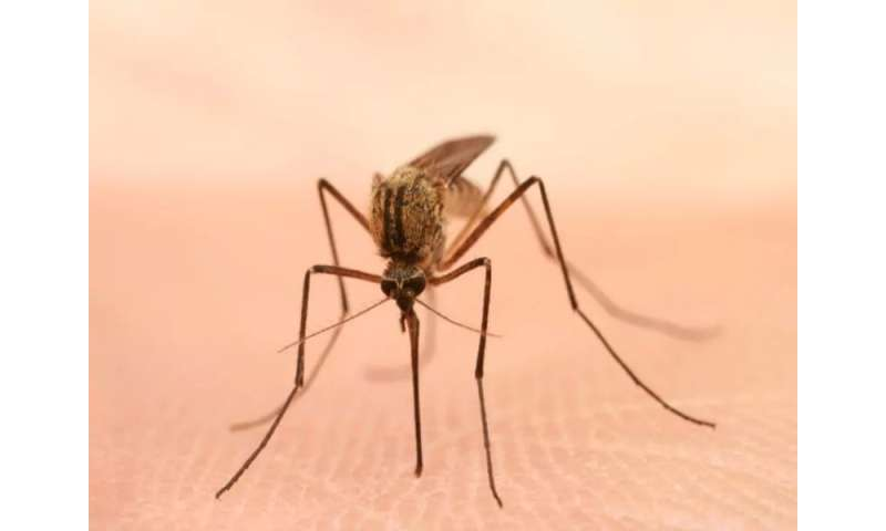 Zika, west nile cases reported in alabama