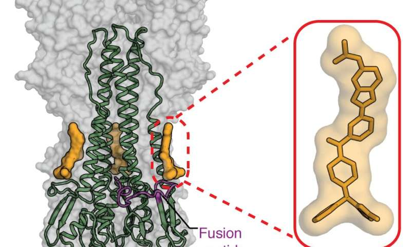 Scientists discover a potential strategy to treat influenza A