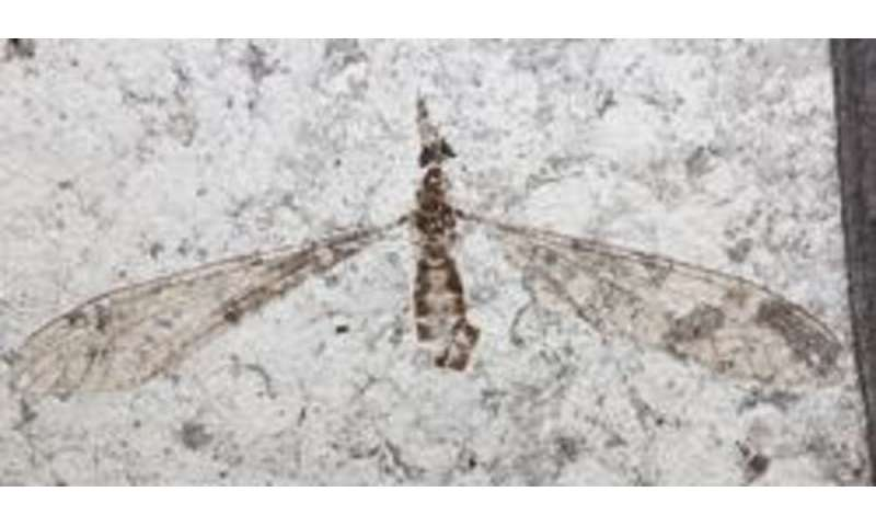 54 million year-old fossil flies yield new insight into the evolution of sight
