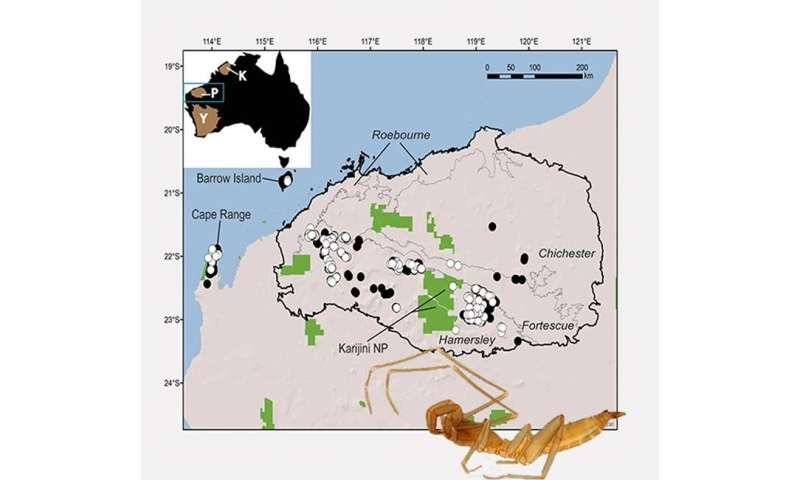 56 new species of arachnids found in Western Australia