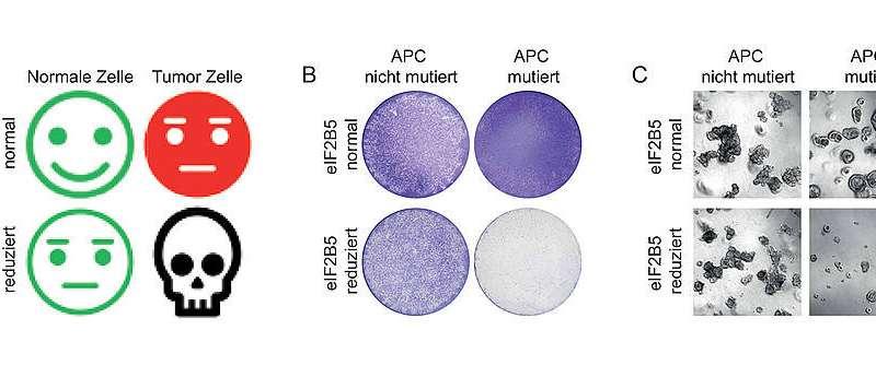 Achilles heel of tumor cells