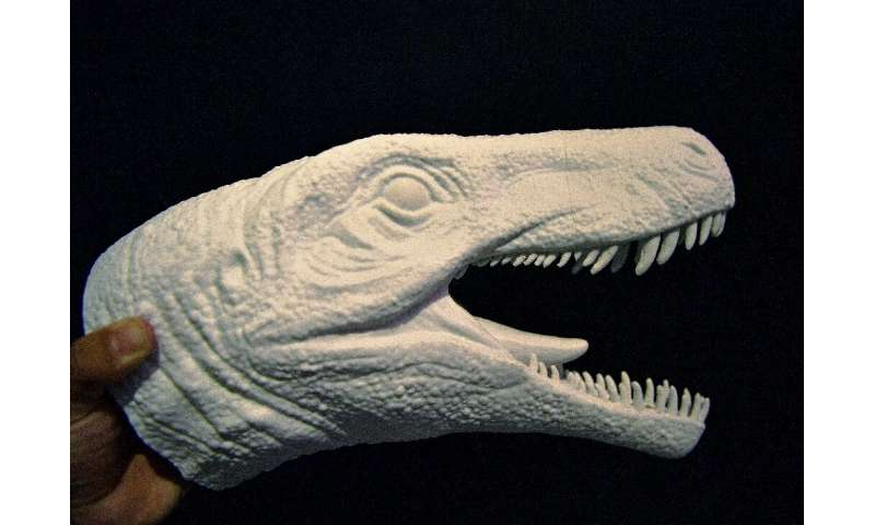 A foam model of the head of the Gnathovorax cabreirai is seen here—the dinosaur was the dominant creature of the Triassic period