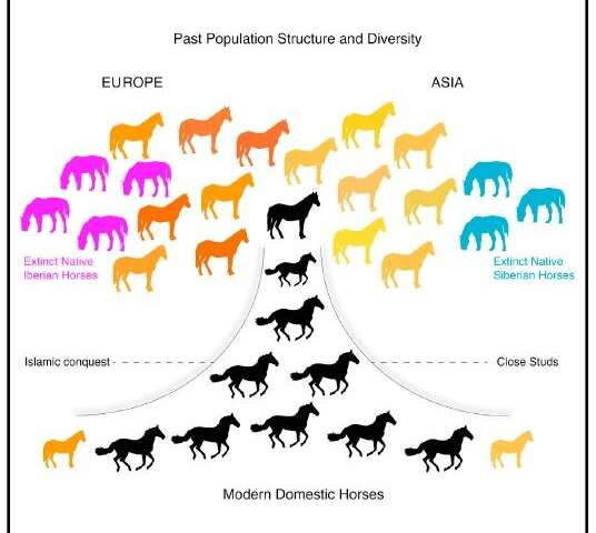 A genomic tour-de-force reveals the last 5,000 years of horse history