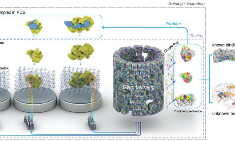 AI reveals nature of RNA-protein interactions