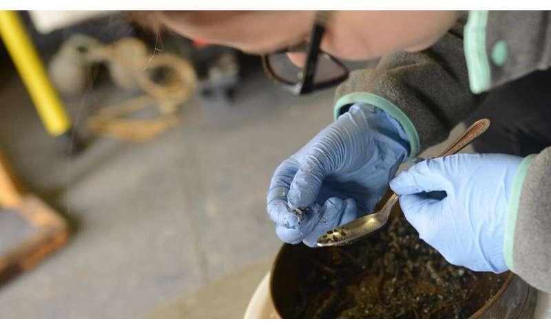 Alaskan seashells reveal a changing Arctic
