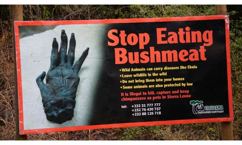Image result for eating wild bush meat