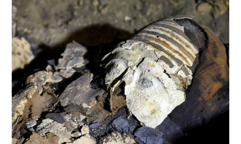 A newly-discovered mummy wrapped in linen with sarcophagus fragments found in burial chambers dating to the Ptolemaic era (323-3