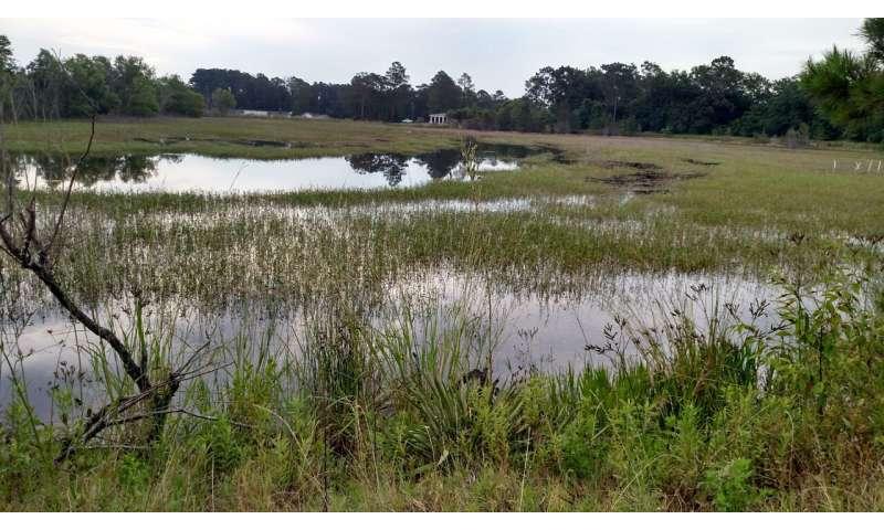 Un nuevo ranavirus amenaza la diversidad de anfibios de EE. UU.